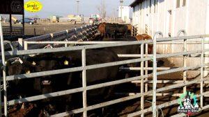 Produs in Sibiu – Karpaten Meat