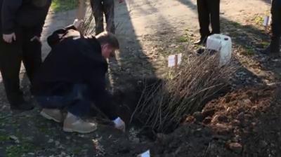 Iohannis planteaza stejar