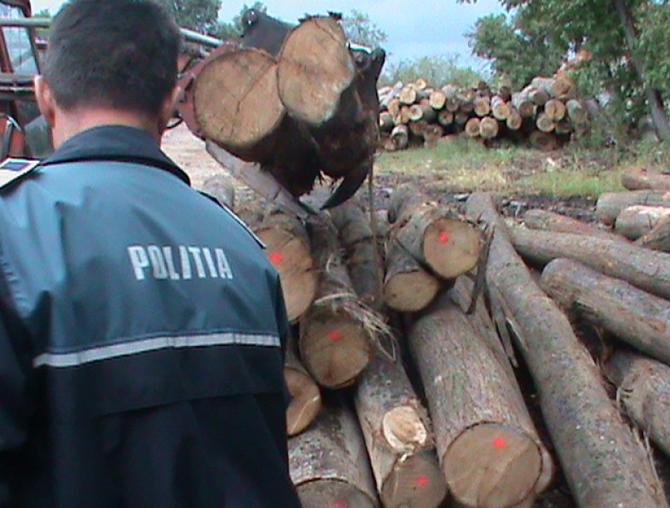 Prins cu lemne dar fara documente