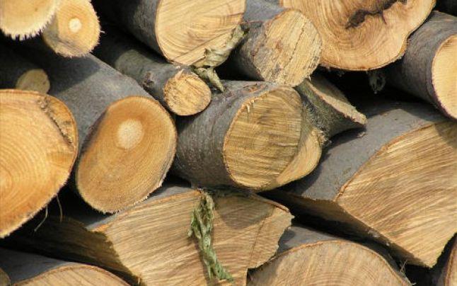 Dosar penal pentru furt de lemne